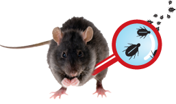 Don's Quality Service Pest Identifier